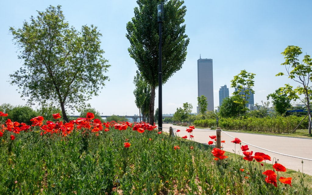 Scenic views and colorful flowers